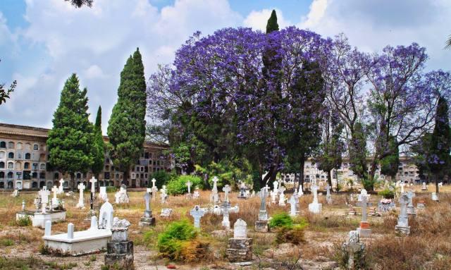 Cementeri vell d'Algemesí, Foto/Vicent Blay.