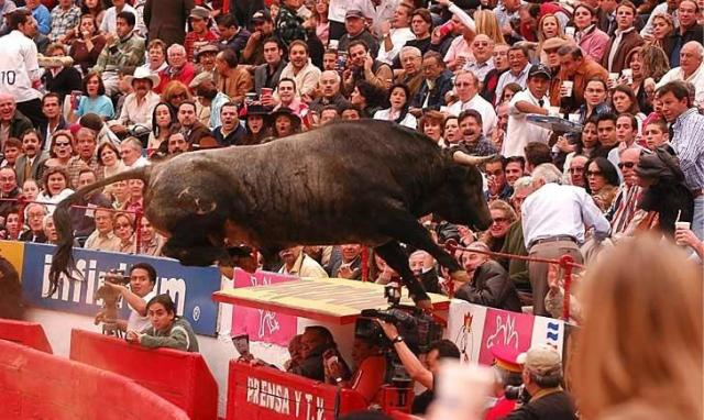 toro volador 2
