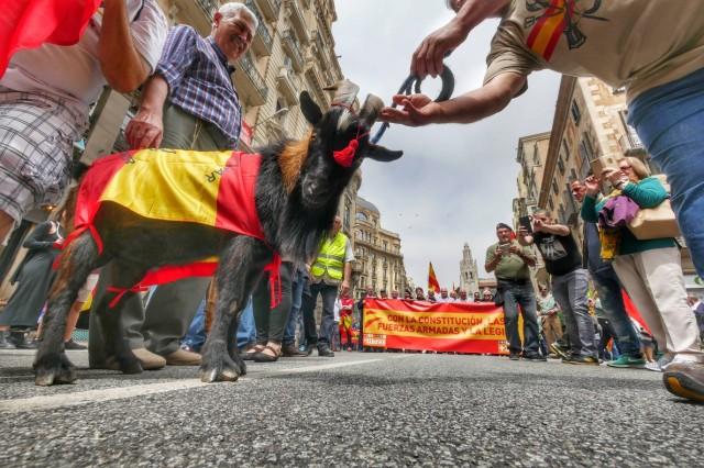 Imatge de la cabra de la Legión en la desfilada del passat 28 de maig pels carrers de Barcelona. El Periódico/Ricard Fadrique.